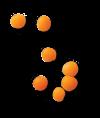 SN-lentils-IR